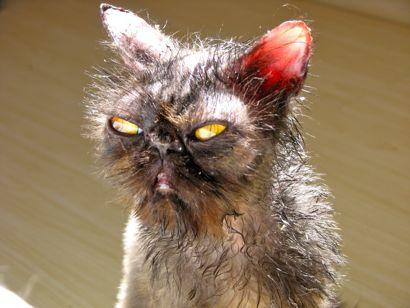 Dizem que Gremlins não podem tomar sol, mas é mentira...