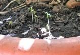 papel-semente
