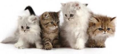 kittens4-410x192