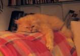 O Haroldo está exausto com esse frio todo...