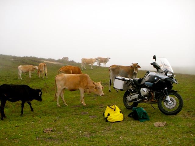 As vacas também queriam dar uma volta