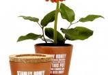 Stanley-Honey