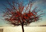 Macieira carregadinha à beira da estrada; parece sobrenatural...