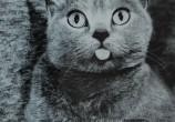 Katzen_Literatur