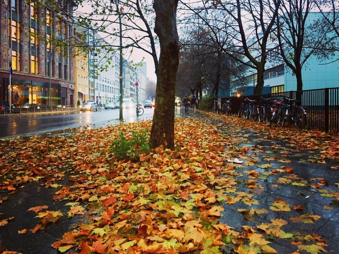 #paracegover A imagem mostra uma calçada coberta de folhas secas, porém, molhadas. Chove. — at Wallstraße, Berlin-Mitte.