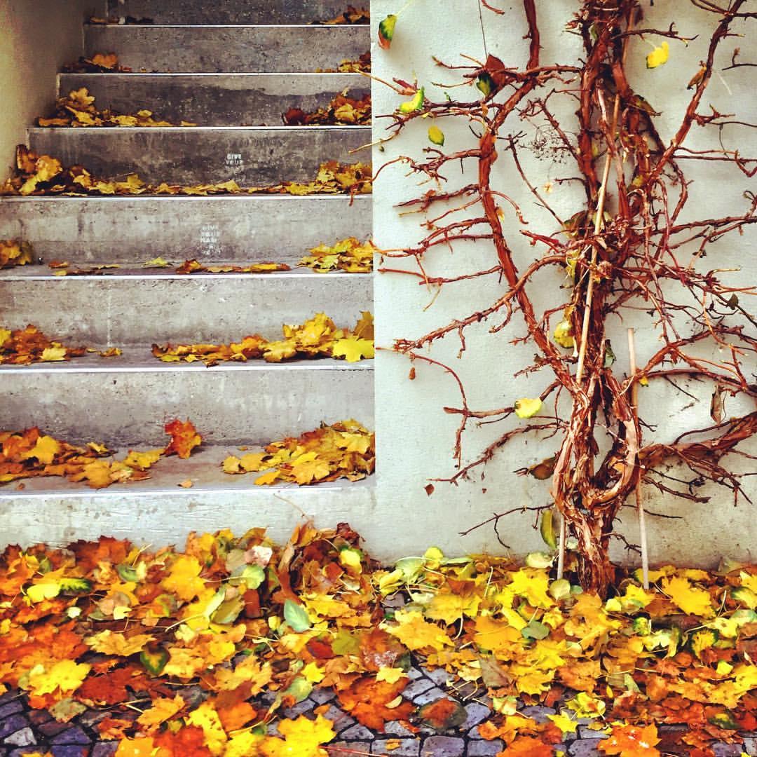 #paracegover A imagem mostrauma trepadeira quase sem folhas. A calçada e a escada ao lado estão cobertas delas. — in Berlin, Germany.