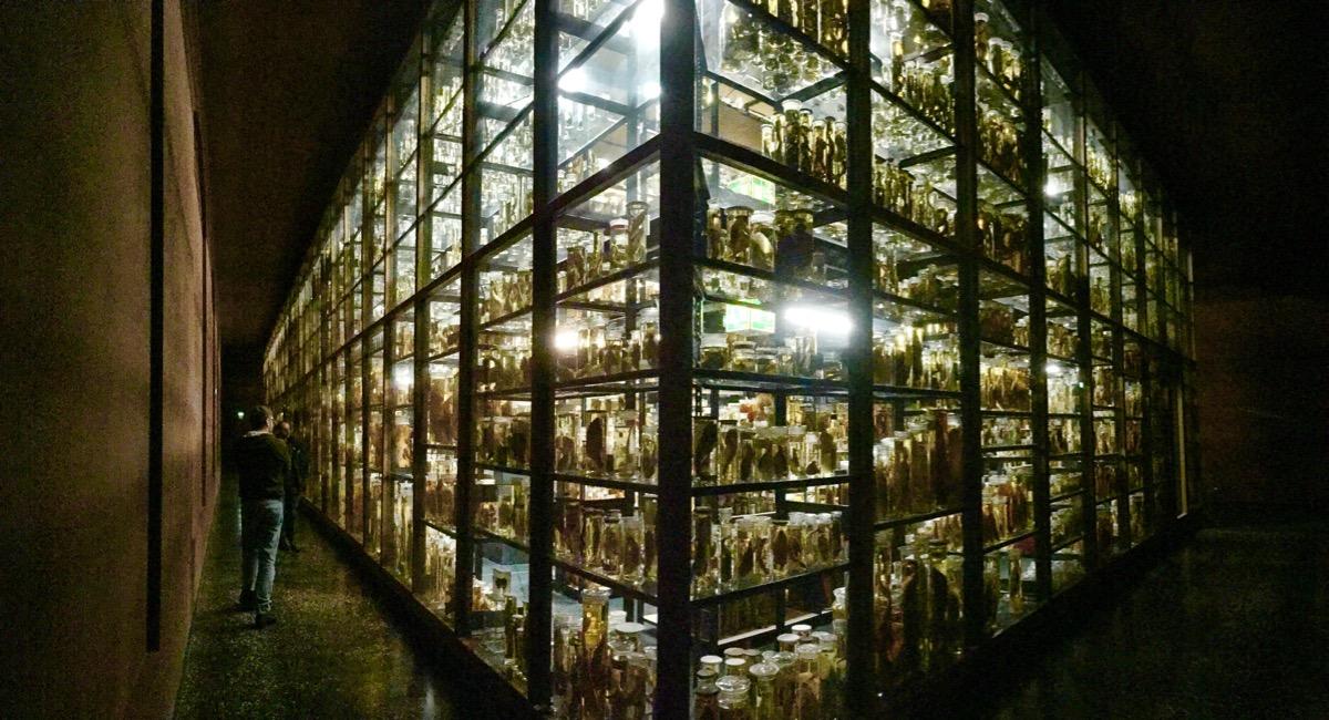 A imagem mostra uma sala de vidro cheia de prateleiras, com muitos vidros. Neles, estão animais conservados em líquido.
