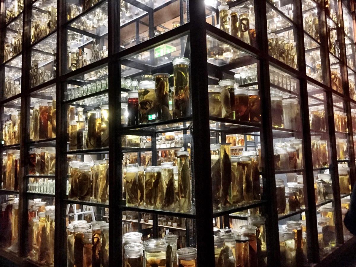 Sala de vidro com frascos de animais em conserva em todas as inúmeras prateleiras.