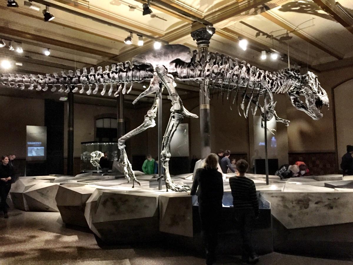 A imagem mostra o esqueleto de um tiranossauro rex.