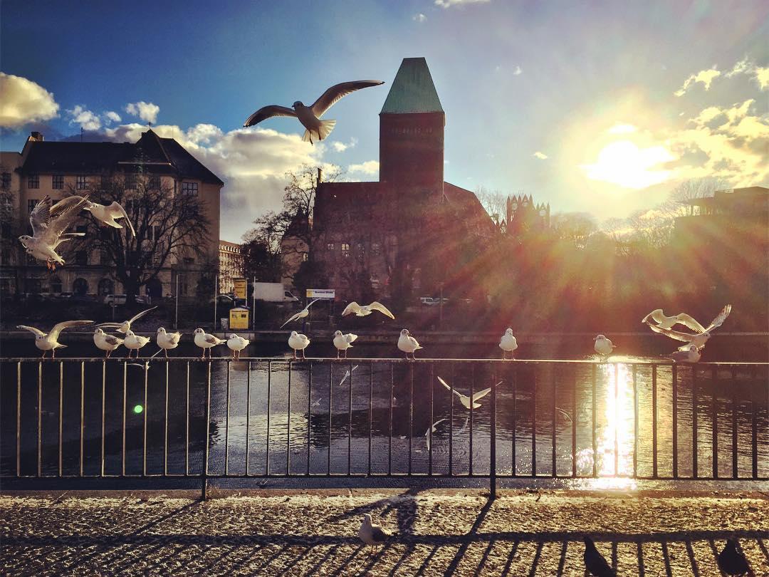 Descrição para deficientes visuais: a imagem mostra pássaros pousados sobre a grade que margeia o canal do rio Spree. Ao fundo, o Märkisches Museum, que conta a história da fundação da cidade de Berlim. — at Reederei Riedel Märkisches Ufer.