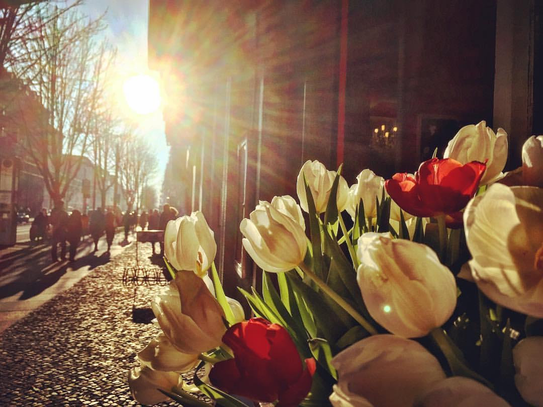 Descrição para deficientes visuais: a imagem mostra a luz do sol sobre um vaso de tulipas brancas e vermelhas colocadas em uma mesa na calçada. As pétalas ficam transparentes e as pessoas caminham na calçada felizes com o calorzinho visual, já que as temperaturas são negativas. — at Kastanienallee.