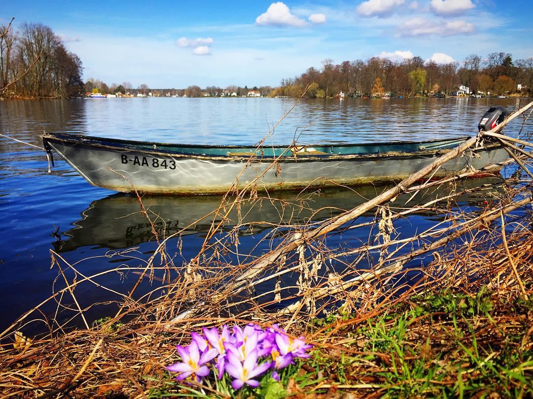 #paracegover Descrição para deficientes visuais: a imagem mostra um barquinho ancorado próximo à borda do rio. Em primeiro plano, um mini buquê de flores naturais brota no meio do capim. O dia está cinematográfico! — at Berlin-Haselhorst.