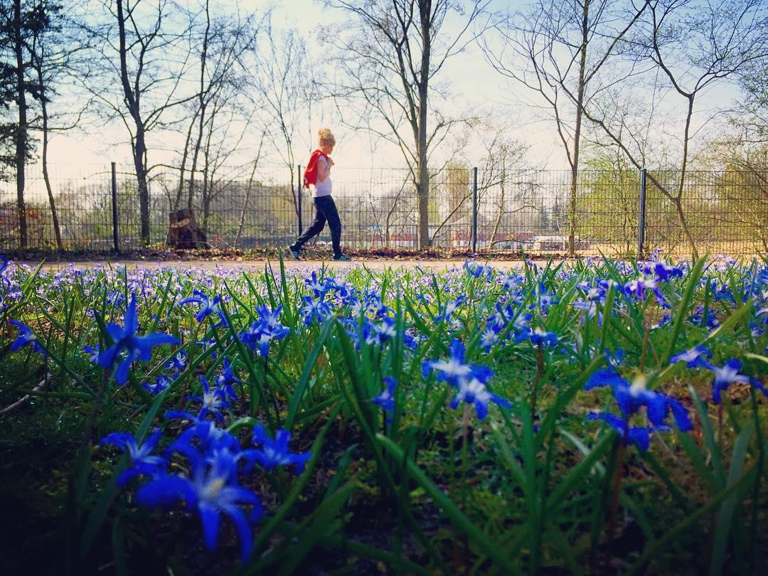 #paracegover Descrição para deficientes visuais: a imagem mostra uma mulher caminhando no parque. Ela usa camiseta branca e calça escura e está carregando um casaco vermelho nas costas. Em primeiro plano, flores silvestres azuis cobrem toda a relva. — in Plötzensee, Berlin, Germany.