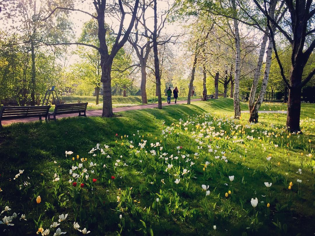 #paracegover Descrição para deficientes visuais: a imagem mostra um casal caminhando por uma alameda arborizada. A relva está coberta de tulipas brancas e amarelas, com algumas convidadas vermelhas. A foto de hoje é para a minha mãe, pois sei que ela adora lugares assim... — at Britzer Garten.