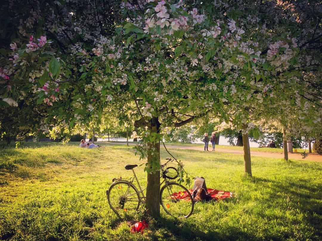 #paracegover Descrição para deficientes visuais: a imagem mostra uma moça deitada embaixo de uma árvore florida, lendo. Sua bicicleta está encostada no tronco. O dia está paradisíaco. — at Inselgarten Treptower Park.