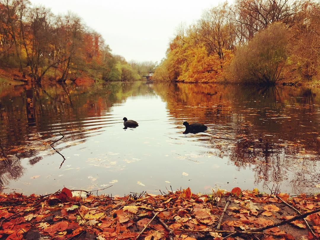 #paracegover Descrição para deficientes visuais: a imagem mostra dois patos numa lagoa (o da direita parece um gatinho). Toda a vegetação em volta está acobreada, colorindo o dia nublado. — at Willmersdorfer Volkspark.