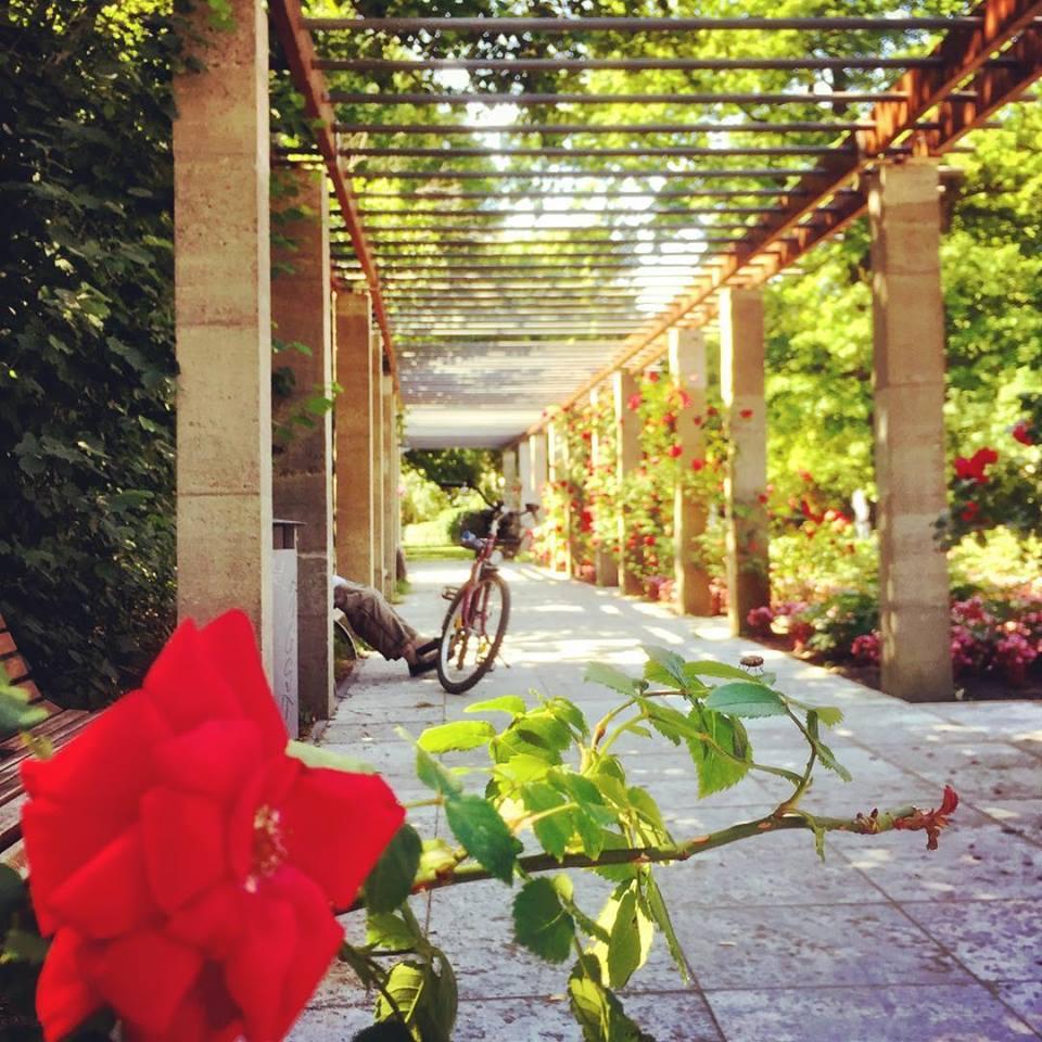 #paracegover Descrição para deficientes visuais: a imagem mostra uma bicicleta estacionada sob um caramanchão ao lado de um par de pernas de uma pessoa sentada num banco. Em primeiro plano, uma rosa vermelha e uma carochinha em cima das folhas. — at Treptower Park.