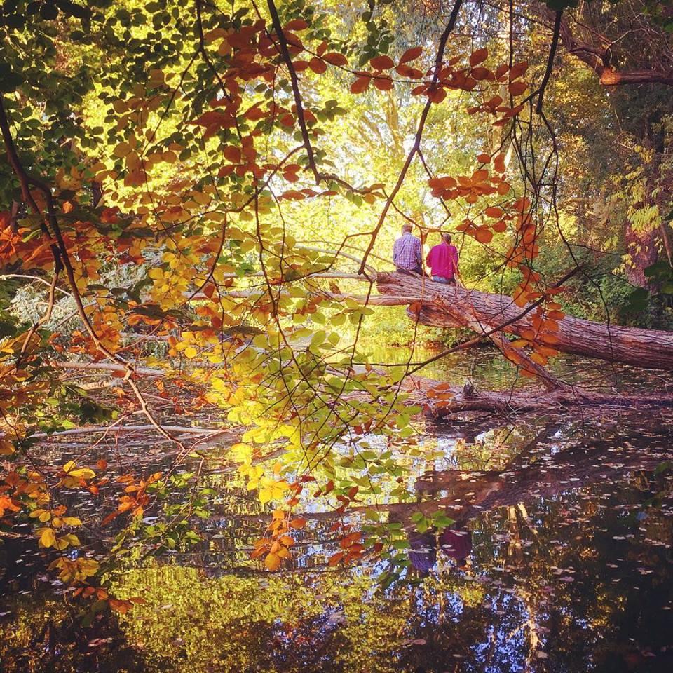 #paracegover Descrição para deficientes visuais: a imagem mostra o Tiergarten, que fica no centro da cidade de Berlim, com as folhas das árvores começando a ficar vermelhas e douradas. Ao fundo, duas pessoas conversam sentadas no tronco de uma árvore caída. Uma delas veste uma camiseta vermelha, combinando com as folhas. — in Tiergarten, Berlin, Germany.