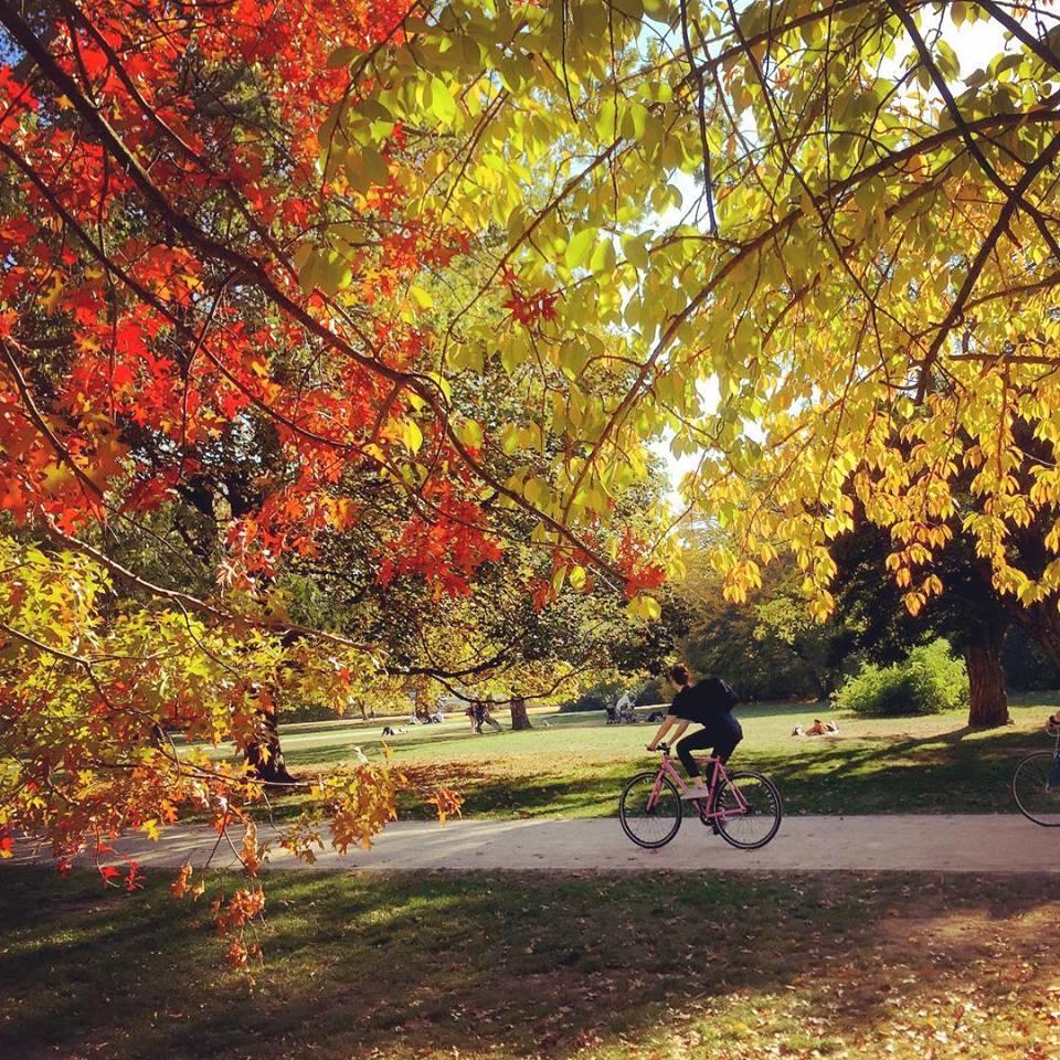 #paracegover Descrição para deficientes visuais: a imagem mostra um ciclista passeando no parque Treptower. As árvores estão com as folhas vermelhas e amarelas. — at Treptower Park.
