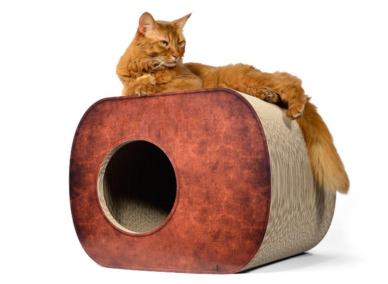 cat-on5
