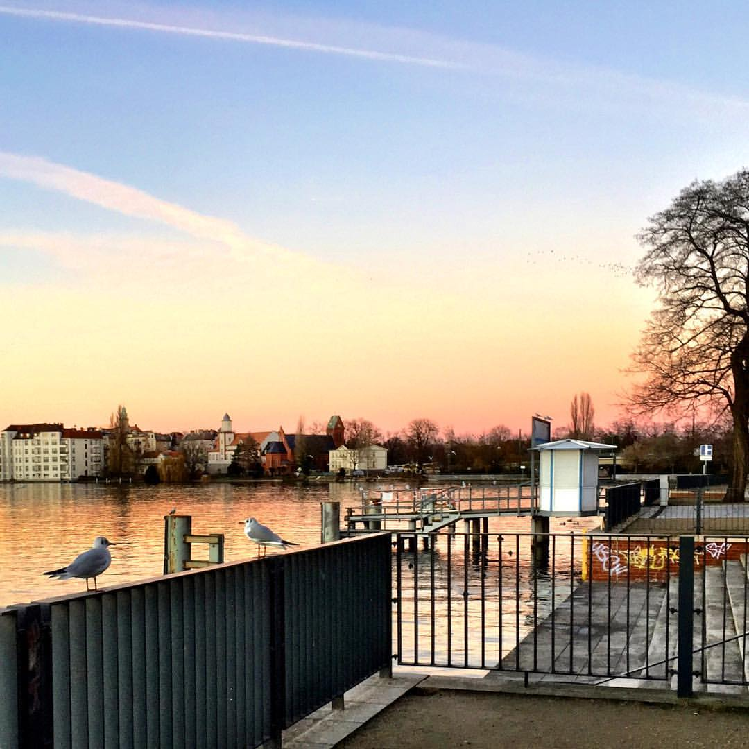 #paracegover A imagem mostra dois pássaros sobre a grade à beira do rio Spree conversando sobre os últimos acontecimentos. O céu é uma mistura de azul, laranja e rosa. — at Berlin Köpenick Spree Ufer.