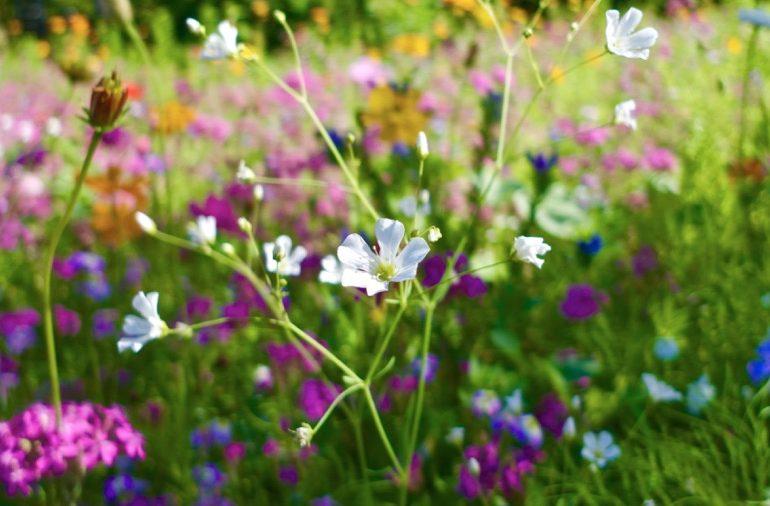 a imagem mostra um jardim florido.