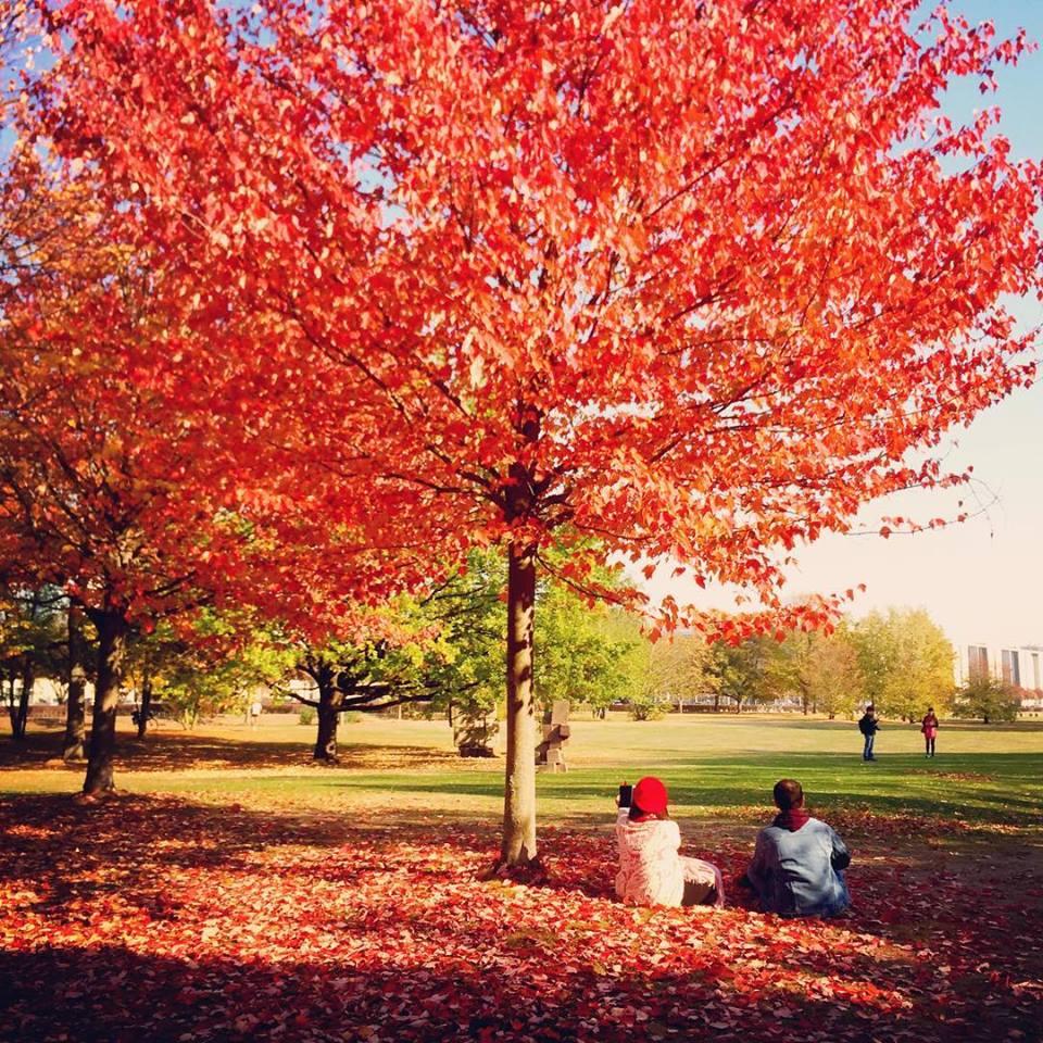 #paracegover Descrição para deficientes visuais: a imagem mostra um casal sentado no mar de folhas vermelhas e pink sob uma árvore intensamente ruiva. A moça usa uma boina vermelha. — at Reichstag dome.
