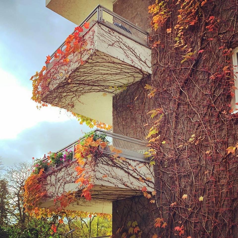 #paracegover Descrição para deficientes visuais: a imagem mostra sacadas em uma fachada coberta com galhos de hera vermelha. A maior parte das folhas já caiu. A luz do outono faz o cenário ter um ar de magia... — in Schöneberg, Berlin, Germany.